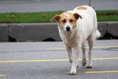Прогонване на кучета
