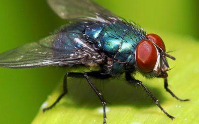 Мухи и комари